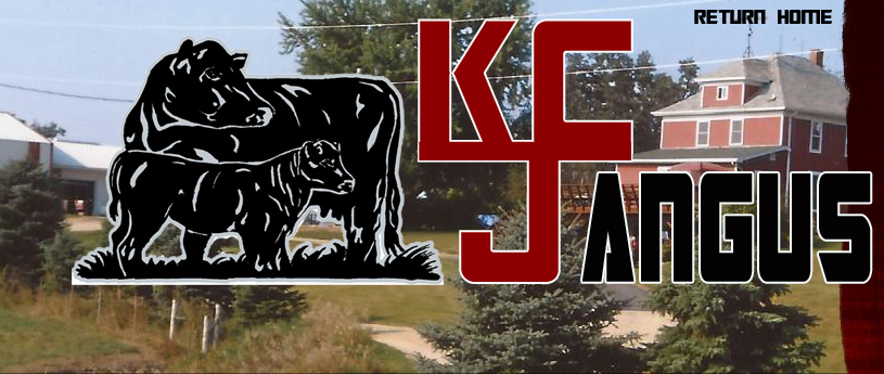 Image result for kcj angus